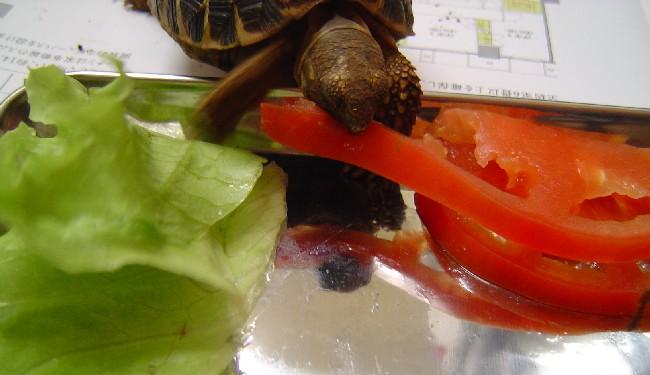 トマト!.jpg