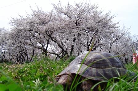 お花見3.jpg