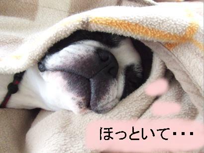 爆睡あんちゃん