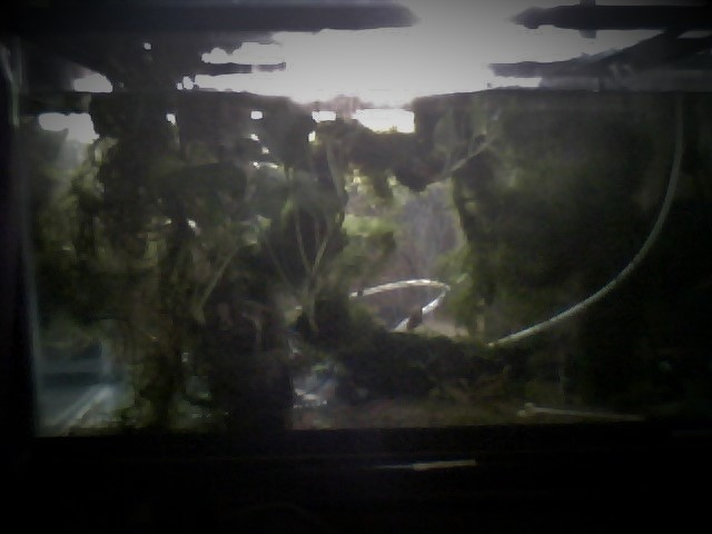 熱帯魚水槽.jpg