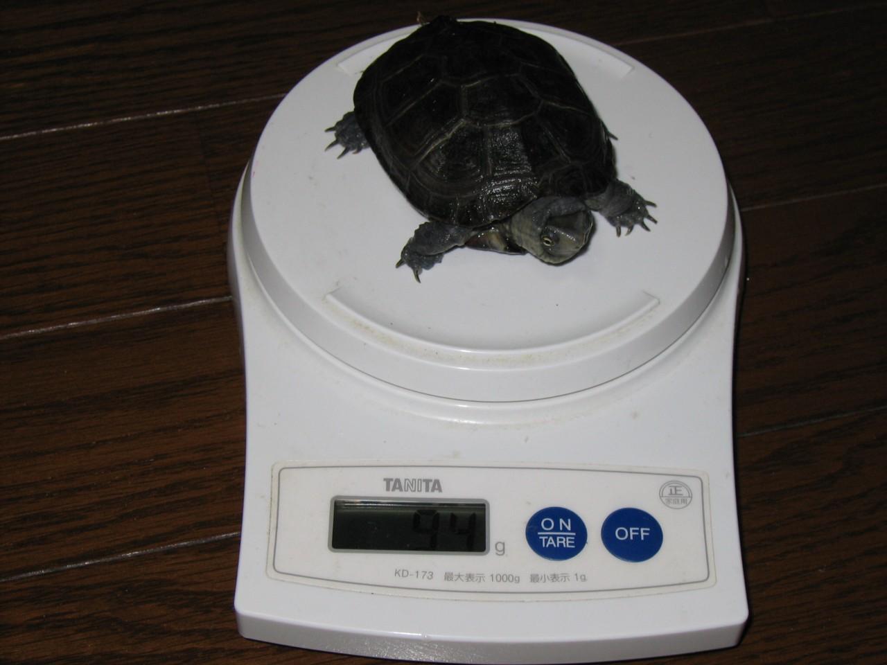 体重(みっきー)