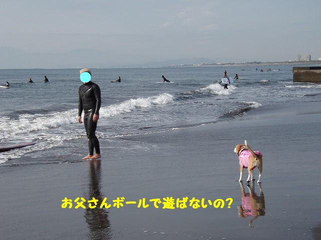 2008_01200063.jpg