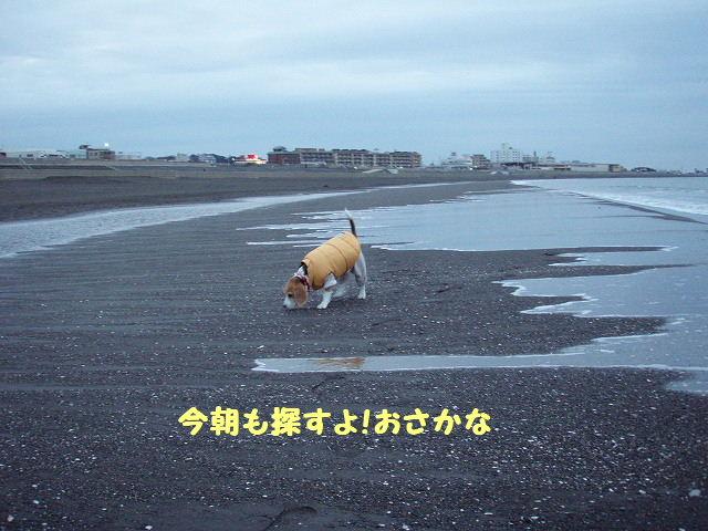 2008_01210009.jpg