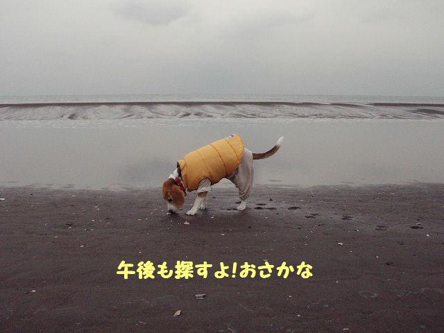 2008_01210017.jpg