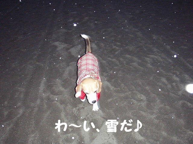2008_01230001.jpg