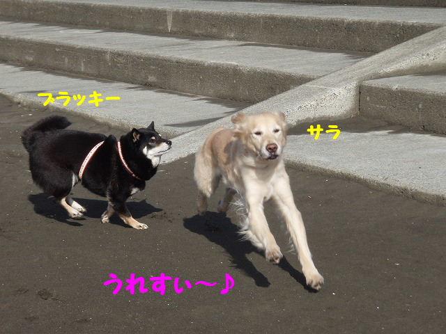 2008_01240010.jpg