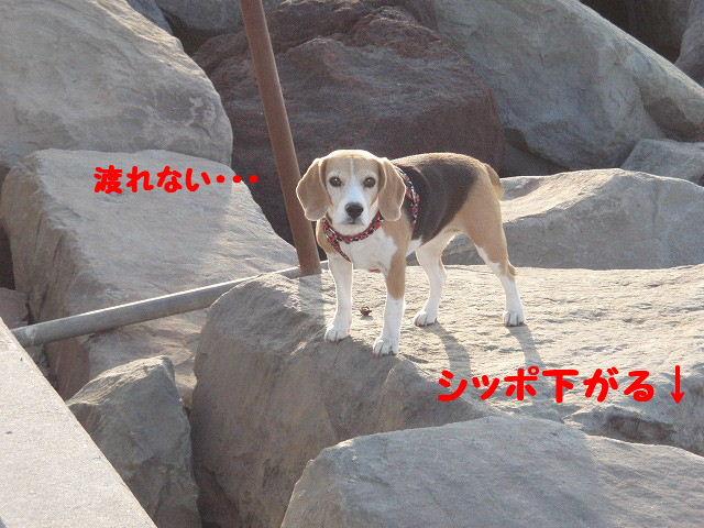 2008_01250068.jpg