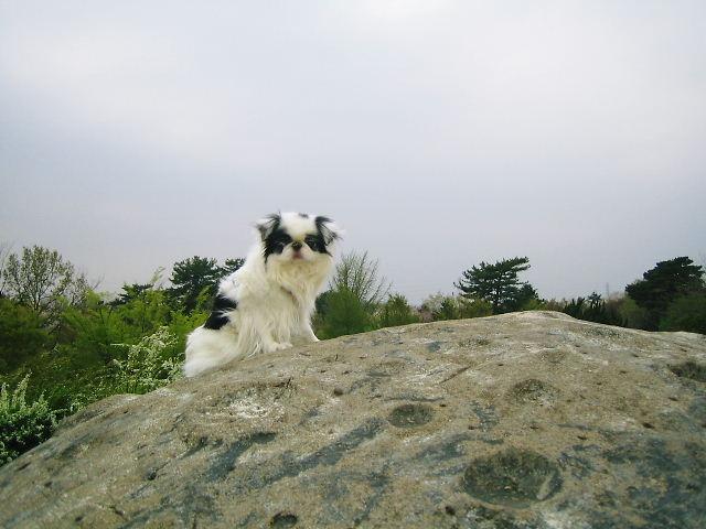国営昭和記念公園7