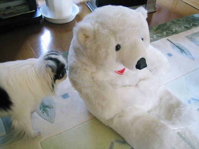 白熊の瀬奈君。