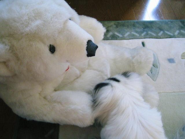 白熊の瀬奈君3