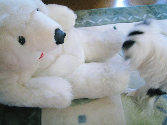 白熊の瀬奈君5