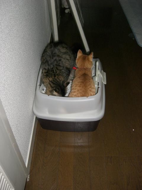 連れトイレ.JPG