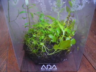 ADA侘び草